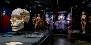 BODY WORLDS Amsterdam: The Happiness Project
